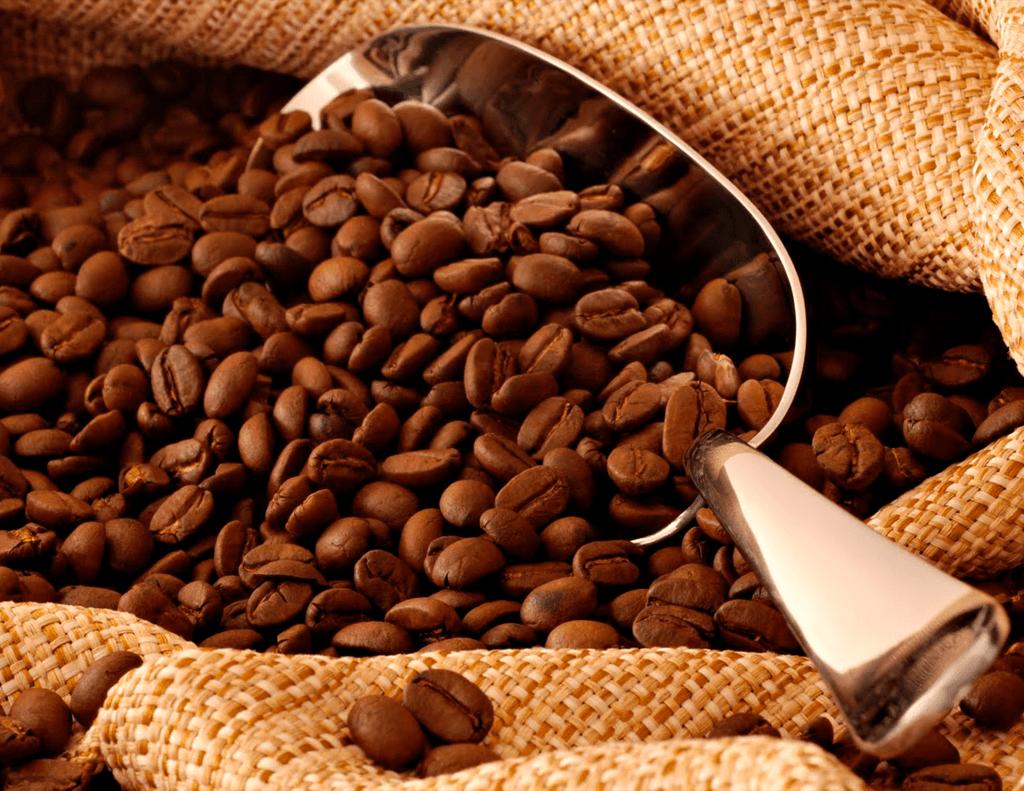 cafeicultura-caninana-min-1024x791-min
